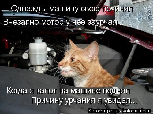 Котоматрица: Однажды машину свою починял Внезапно мотор у нее заурчал... Когда я капот на машине поднял Причину урчания я увидал...