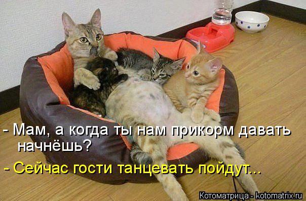 Котоматрица: - Мам, а когда ты нам прикорм давать  начнёшь? - Сейчас гости танцевать пойдут...