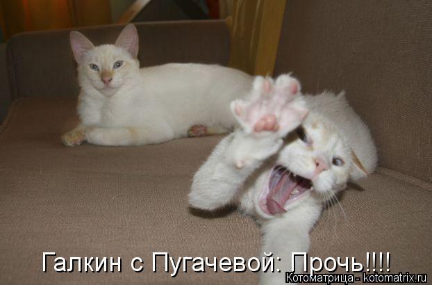 Котоматрица: Галкин с Пугачевой: Прочь!!!!