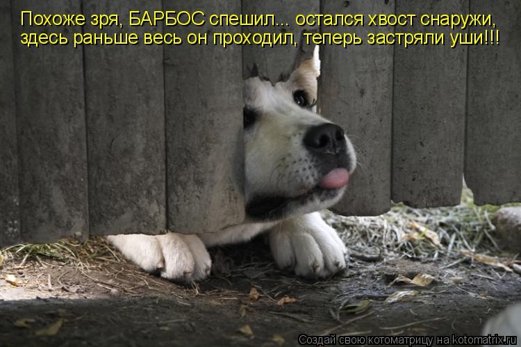 Котоматрица: Похоже зря, БАРБОС спешил... остался хвост снаружи, здесь раньше весь он проходил, теперь застряли уши!!!