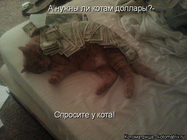 Котоматрица: А нужны ли котам доллары?- Спросите у кота!
