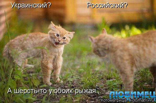 Котоматрица: Украинский? Российский? А шерсть-то у обоих рыжая...