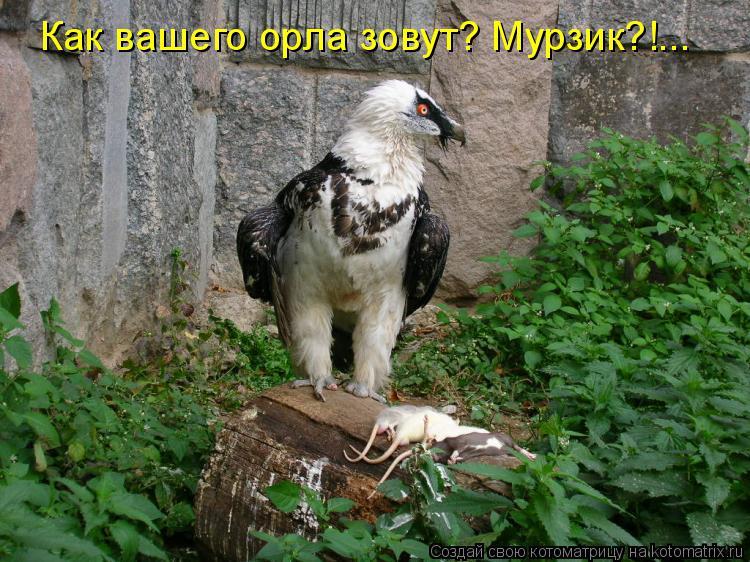 Котоматрица: Как вашего орла зовут? Мурзик?!...