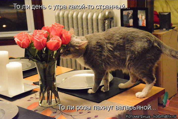 Котоматрица: То ли день с утра какой-то странный... То ли розы пахнут валерьяной...
