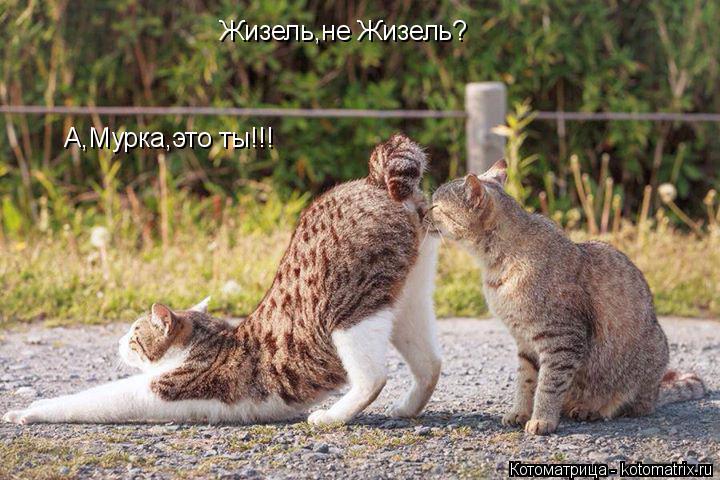 Котоматрица: Жизель,не Жизель? А,Мурка,это ты!!!
