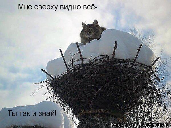 Котоматрица: Мне сверху видно всё- Ты так и знай!
