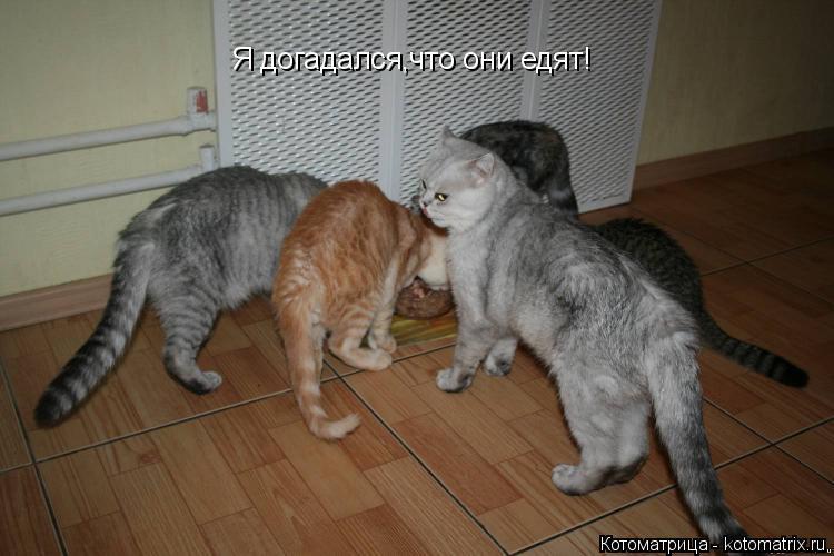 Котоматрица: Я догадался,что они едят!