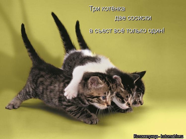 Котоматрица: Три котёнка две сосиски а съест всё только один!
