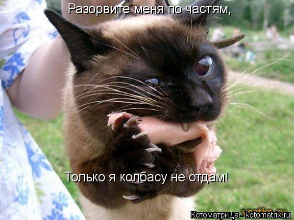 Котоматрица: Разорвите меня по частям, Только я колбасу не отдам!