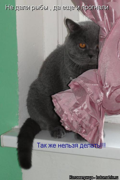 Котоматрица: Не дали рыбы , да еще и прогнали Так же нельзя делать!!!