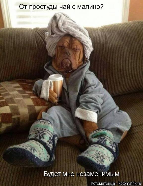 Котоматрица: От простуды чай с малиной Будет мне незаменимым