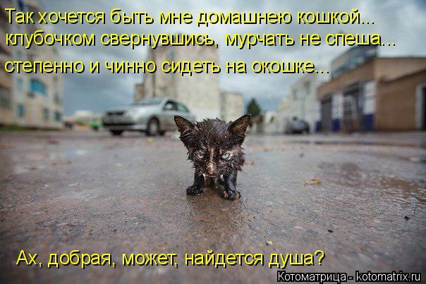 Котоматрица: Так хочется быть мне домашнею кошкой... Ах, добрая, может, найдется душа? клубочком свернувшись, мурчать не спеша... степенно и чинно сидеть на
