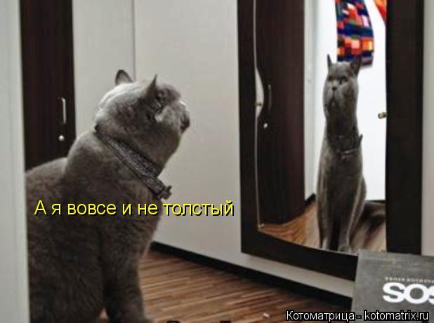Котоматрица: А я вовсе и не толстый