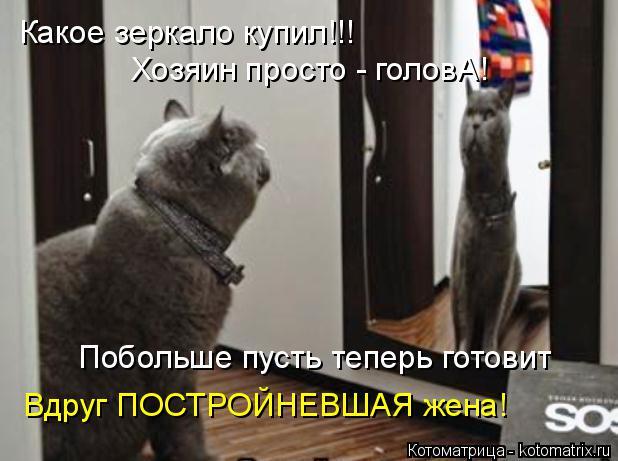 Котоматрица: Какое зеркало купил!!!  Хозяин просто - головА! Побольше пусть теперь готовит Вдруг ПОСТРОЙНЕВШАЯ жена!