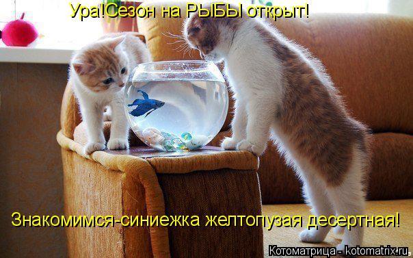 Котоматрица: Знакомимся-синиежка желтопузая десертная! Ура!Сезон на РЫБЫ открыт!