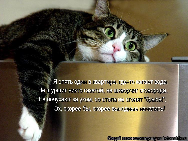 """Котоматрица: Я опять один в квартире, где-то капает вода, Не шуршит никто газетой, не шкворчит сковорода, Не почухают за ухом, со стола не сгонят """"брысь!"""", Э"""