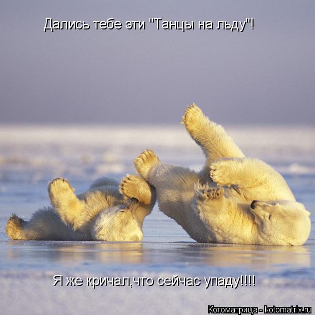 """Котоматрица: Дались тебе эти """"Танцы на льду""""! Я же кричал- Я же кричал,что сейчас упаду!!!!"""