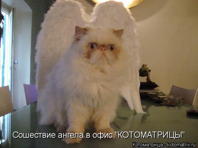 """Котоматрица: Сошествие ангела в офис """"КОТОМАТРИЦЫ"""""""