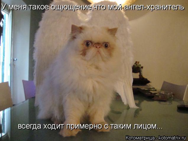 Котоматрица: У меня такое ощющение,что мой ангел-хранитель всегда ходит примерно с таким лицом...