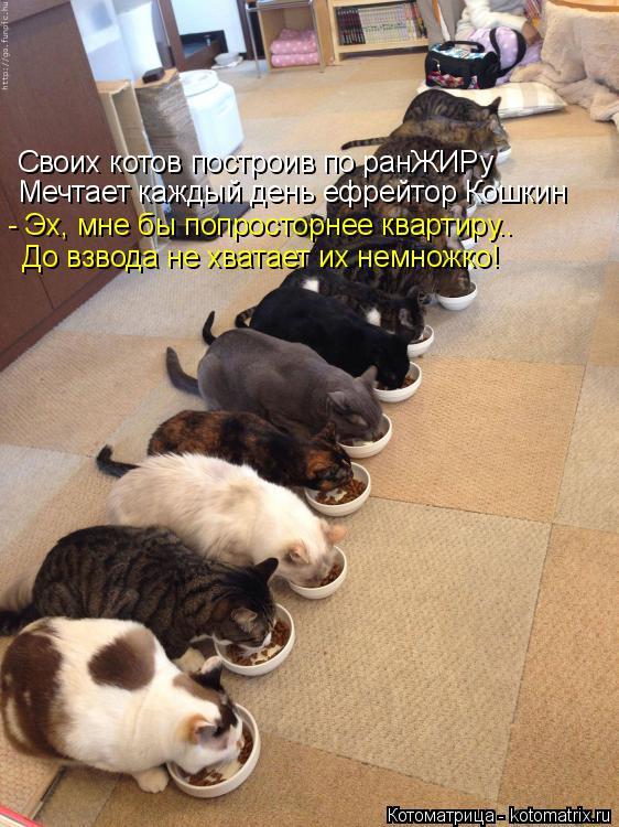 Котоматрица: Своих котов построив по ранЖИРу Мечтает каждый день ефрейтор Кошкин - Эх, мне бы попросторнее квартиру.. До взвода не хватает их немножко!