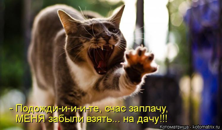 Котоматрица: - Подожди-и-и-и-те, счас заплачу, МЕНЯ забыли взять... на дачу!!!