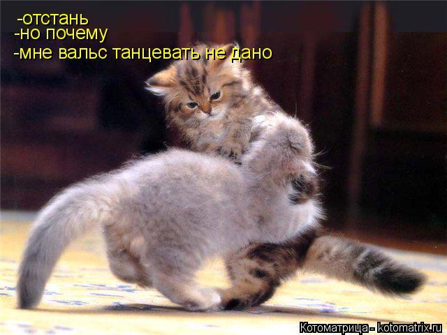 Котоматрица: -отстань -но почему -мне вальс танцевать не дано