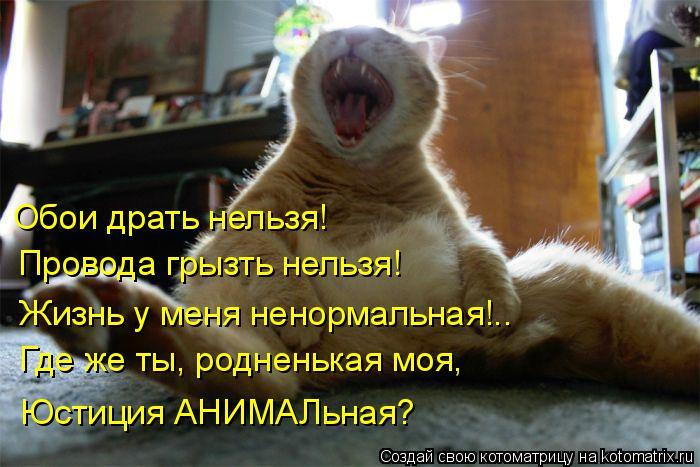 Котоматрица: Обои драть нельзя! Провода грызть нельзя! Жизнь у меня ненормальная!.. Где же ты, родненькая моя, Юстиция АНИМАЛьная?