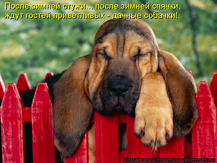 Котоматрица: После зимней стужи... после зимней спячки, ждут гостей приветливых - дачные собачки!