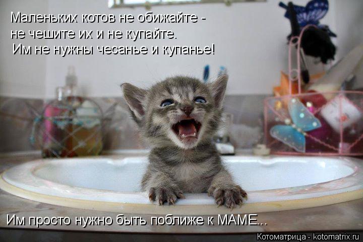 Котоматрица: Маленьких котов не обижайте - не чешите их и не купайте. Им не нужны чесанье и купанье! Им просто нужно быть поближе к МАМЕ...