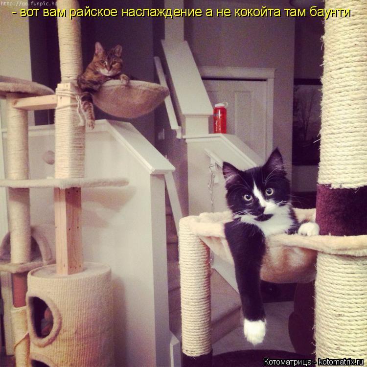 Котоматрица: - вот вам райское наслаждение а не кокойта там баунти