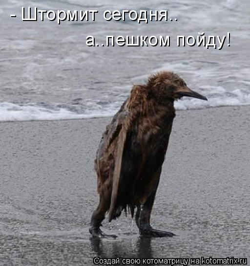 Котоматрица: - Штормит сегодня.. а..пешком пойду!