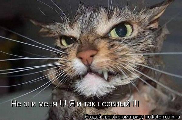 Котоматрица: Не зли меня !!! Я и так нервный !!!