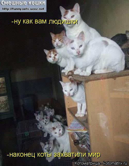 Котоматрица: ну как вам  наконец коты захватили мир людишки - -