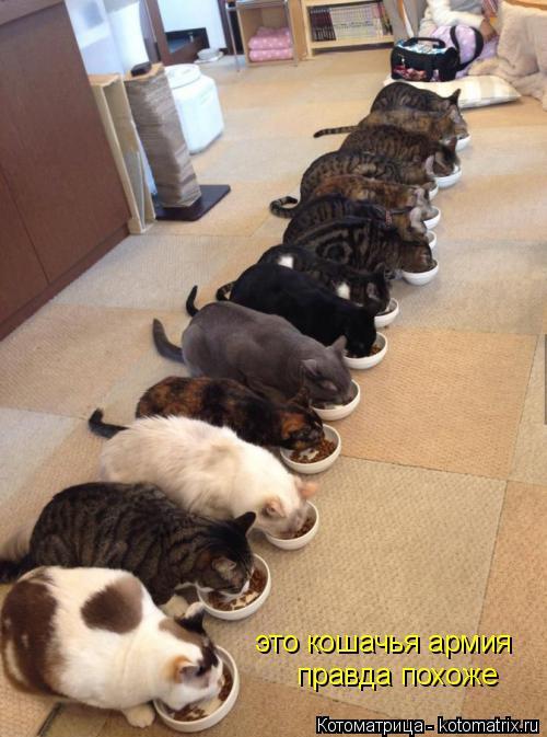 Котоматрица: это кошачья армия правда похоже