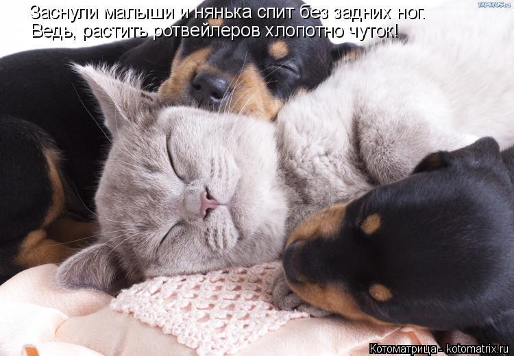 Котоматрица: Заснули малыши и нянька спит без задних ног. Ведь, растить ротвейлеров хлопотно чуток!