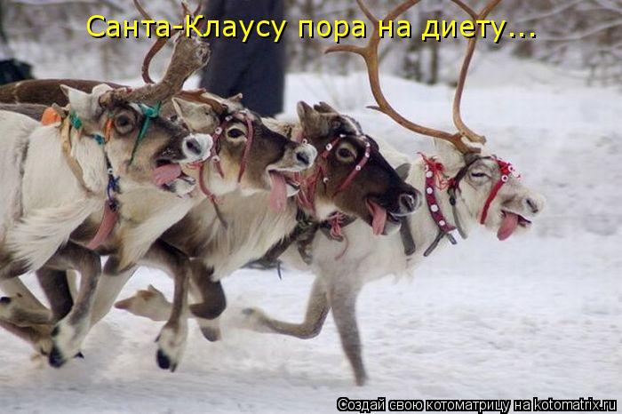Котоматрица: Санта-Клаусу пора на диету...