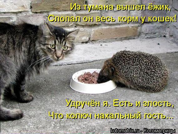 Котоматрица: Из тумана вышел ёжик, Слопал он весь корм у кошек! Удручён я. Есть и злость, Что колюч нахальный гость...