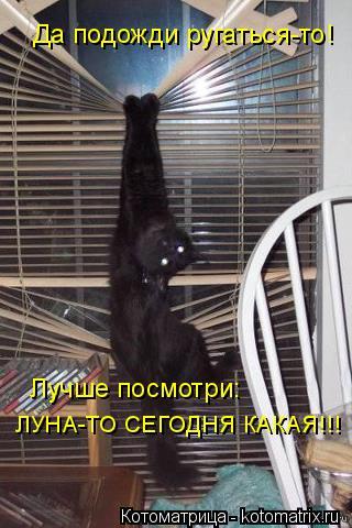 Котоматрица: Да подожди ругаться-то! Лучше посмотри: ЛУНА-ТО СЕГОДНЯ КАКАЯ!!!