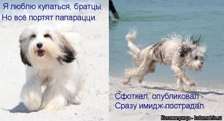 Котоматрица: Я люблю купаться, братцы, Но всё портят папарацци. Сфоткал, опубликовал - Сразу имидж пострадал.
