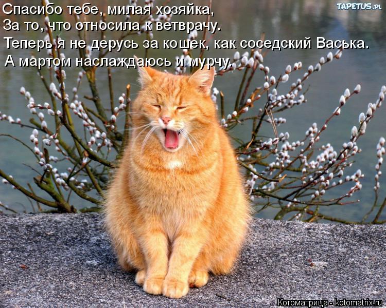 Котоматрица: Спасибо тебе, милая хозяйка, За то, что относила к ветврачу. Теперь я не дерусь за кошек, как соседский Васька. А мартом наслаждаюсь и мурчу.