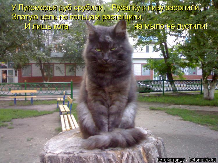 Котоматрица: У Лукоморья дуб срубили,   Русалку к пиву засолили, на мыло не пустили! Златую цепь по кольцам растащили,   И лишь кота