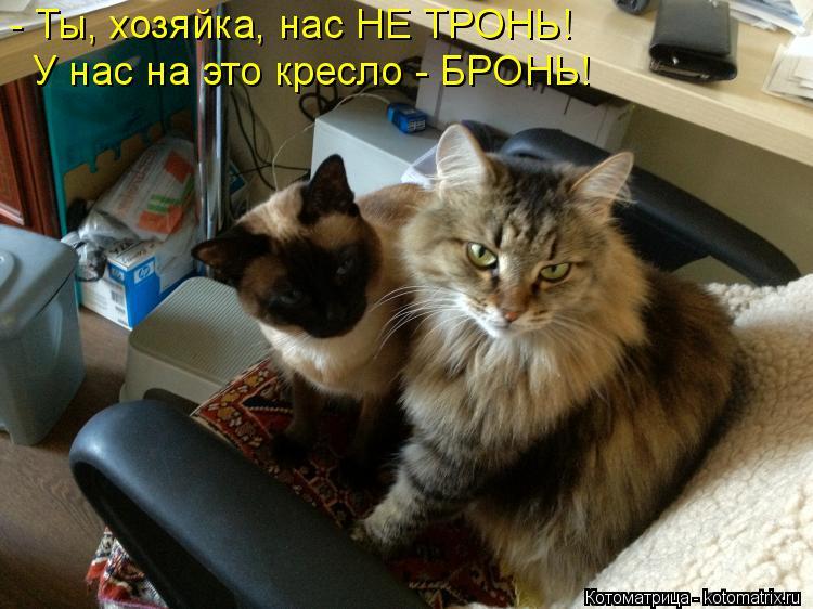Котоматрица: - Ты, хозяйка, нас НЕ ТРОНЬ! У нас на это кресло - БРОНЬ!