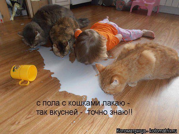 Котоматрица: с пола с кошками лакаю - так вкусней -  точно знаю!!
