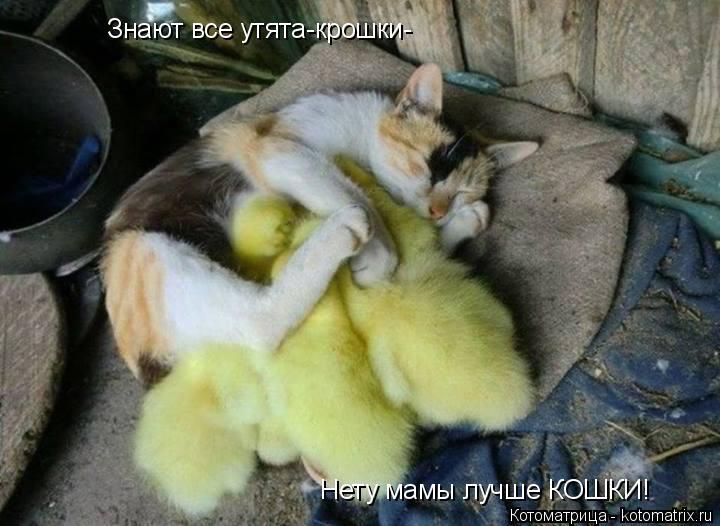 Котоматрица: Знают все утята-крошки- Нету мамы лучше КОШКИ!