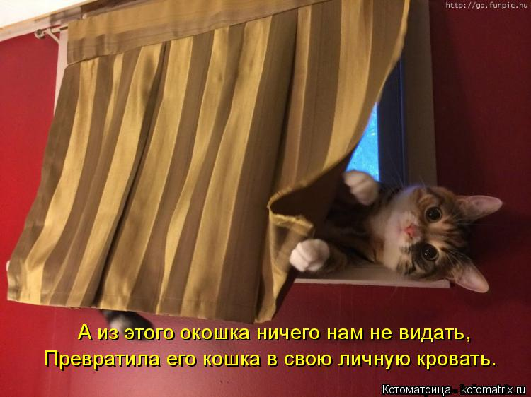 Котоматрица: А из этого окошка ничего нам не видать, Превратила его кошка в свою личную кровать.
