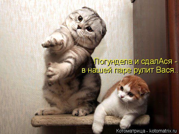 Котоматрица: в нашей паре рулит Вася... Погундела и сдалАся -
