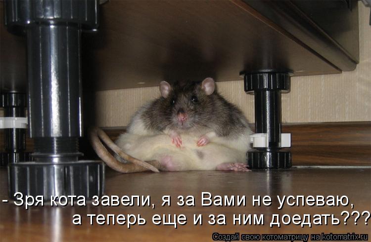 Котоматрица: - Зря кота завели, я за Вами не успеваю,   а теперь еще и за ним доедать???