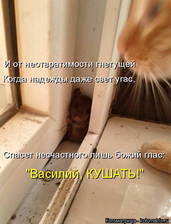 """Котоматрица: Когда надежды даже свет угас, И от неотвратимости гнетущей Спасет несчастного лишь божий глас: """"Василий, КУШАТЬ!"""""""