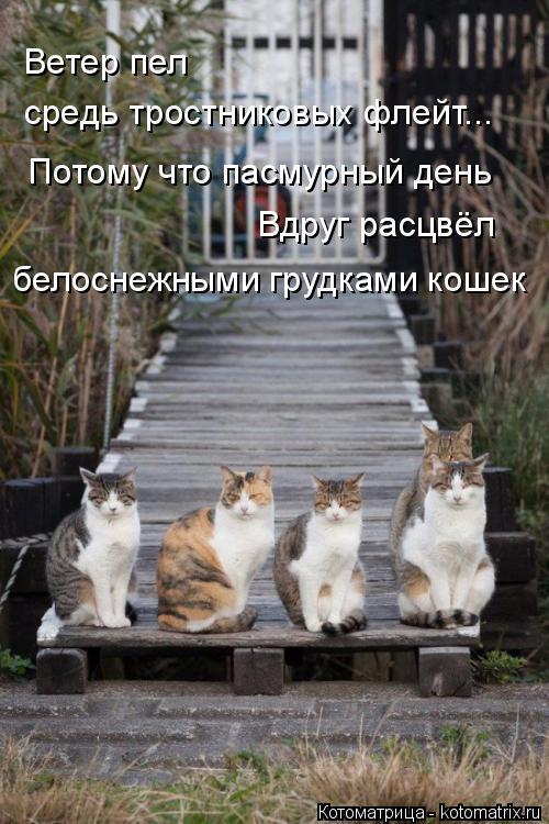 Котоматрица: Ветер пел средь тростниковых флейт... Потому что пасмурный день Вдруг расцвёл белоснежными грудками кошек