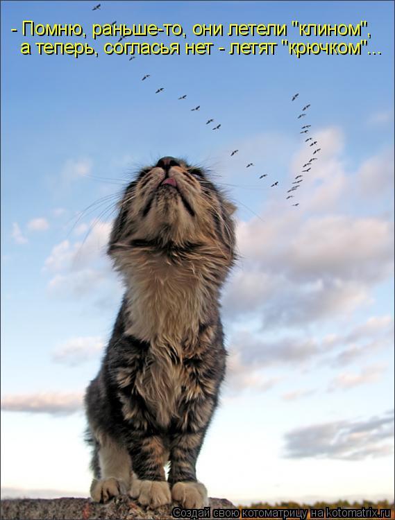 """Котоматрица: - Помню, раньше-то, они летели """"клином"""", а теперь, согласья нет - летят """"крючком""""..."""